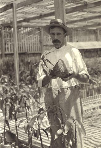 Photo of a man (Edward Simmonds) in a hat holding a potted mango plant.